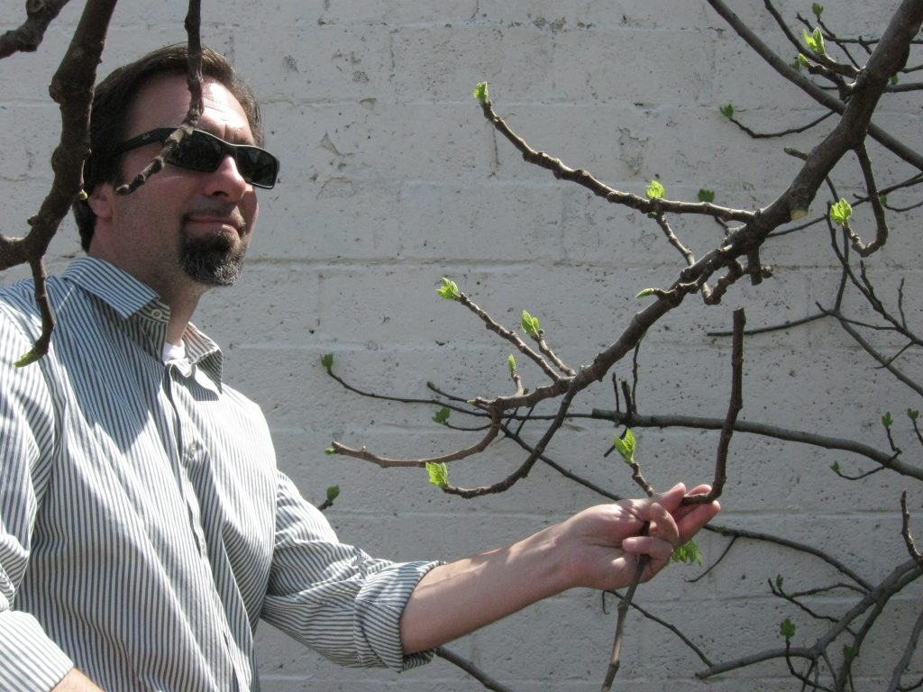 Kevin Hamok takes a cutting from a fig tree in the SEEDS garden. (Photo Credit: Cammie Bellamy)