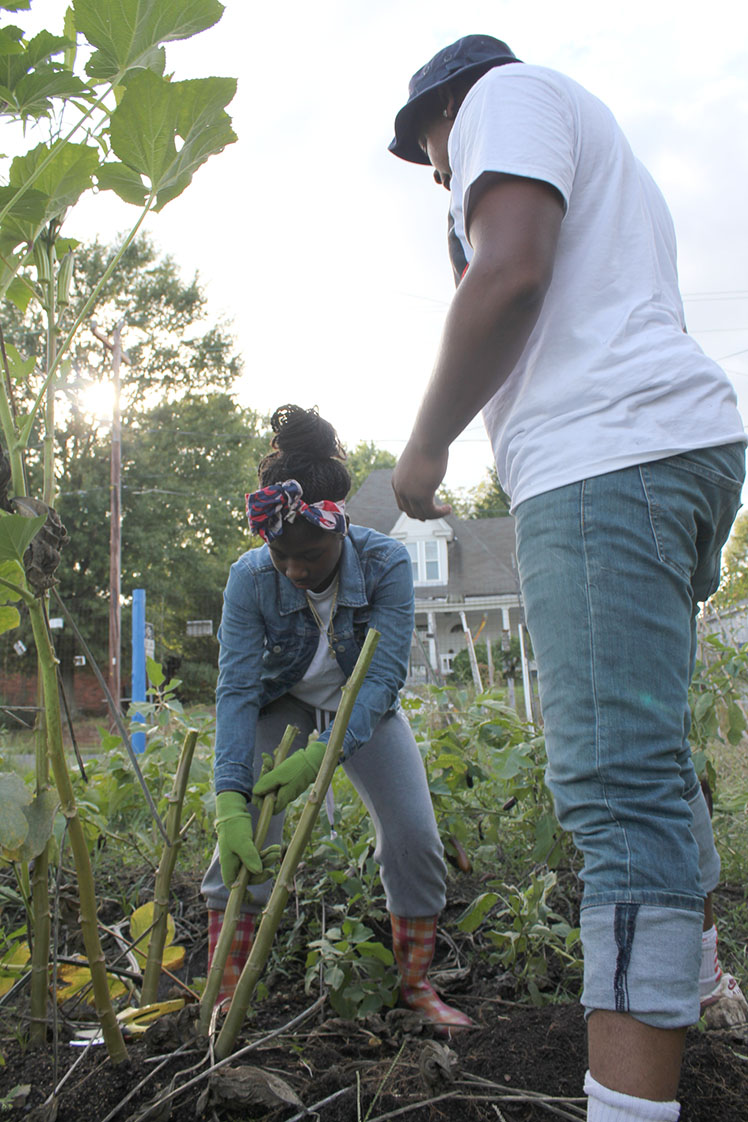 Latasha McMillan and Javonte Carver uproot a stalk to add to the compost pile. (Staff photo by Mary Alta Feddeman)